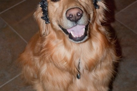 New Year's Eve Golden Retriever Crown hat