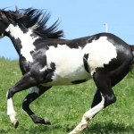 The 7 Most Popular Horse Breeds And Why We Love Them