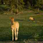 5 Of The Rarest Horse Breeds In The World