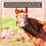 17 Of Our Favorite Equestrian Memes