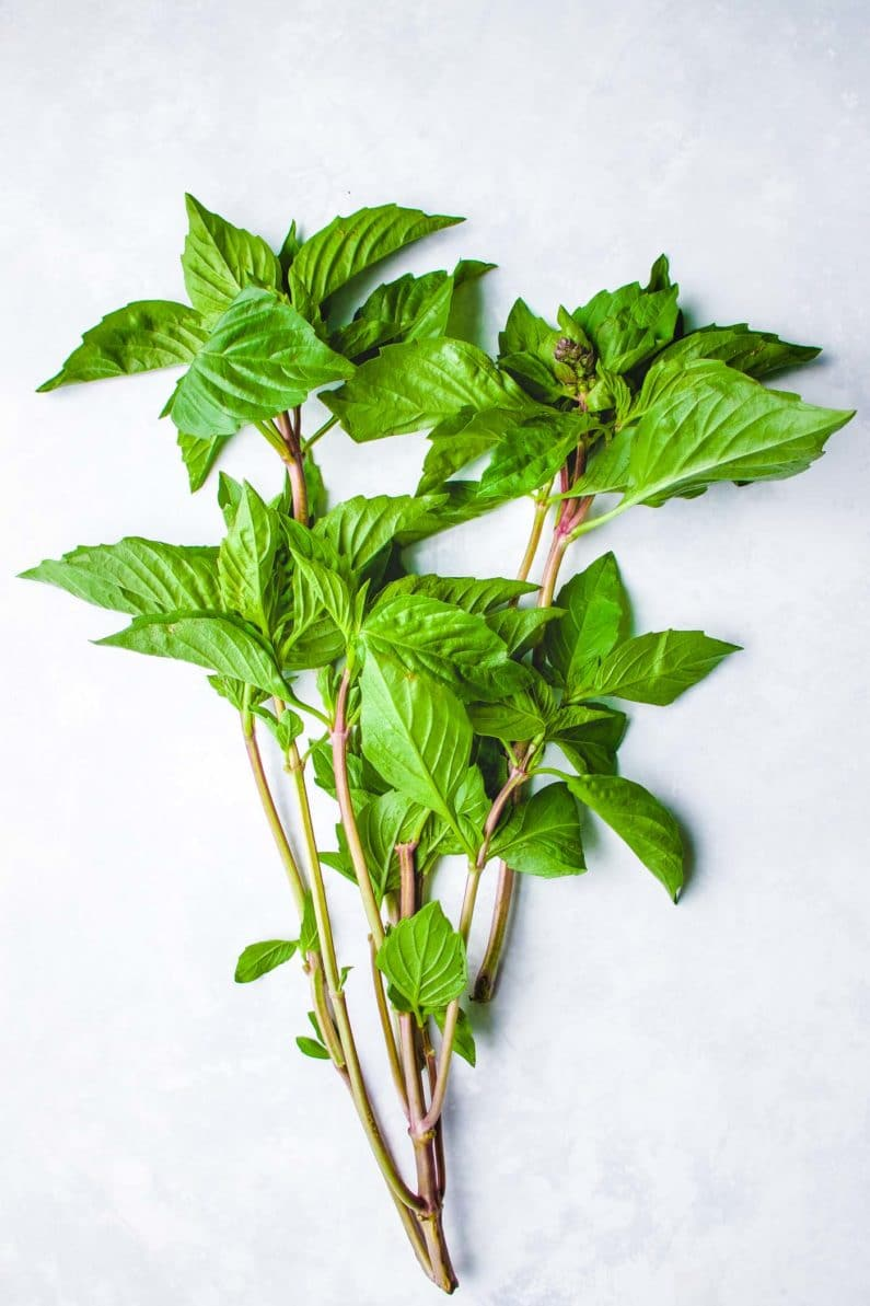 Thai basil for pad krapow gai