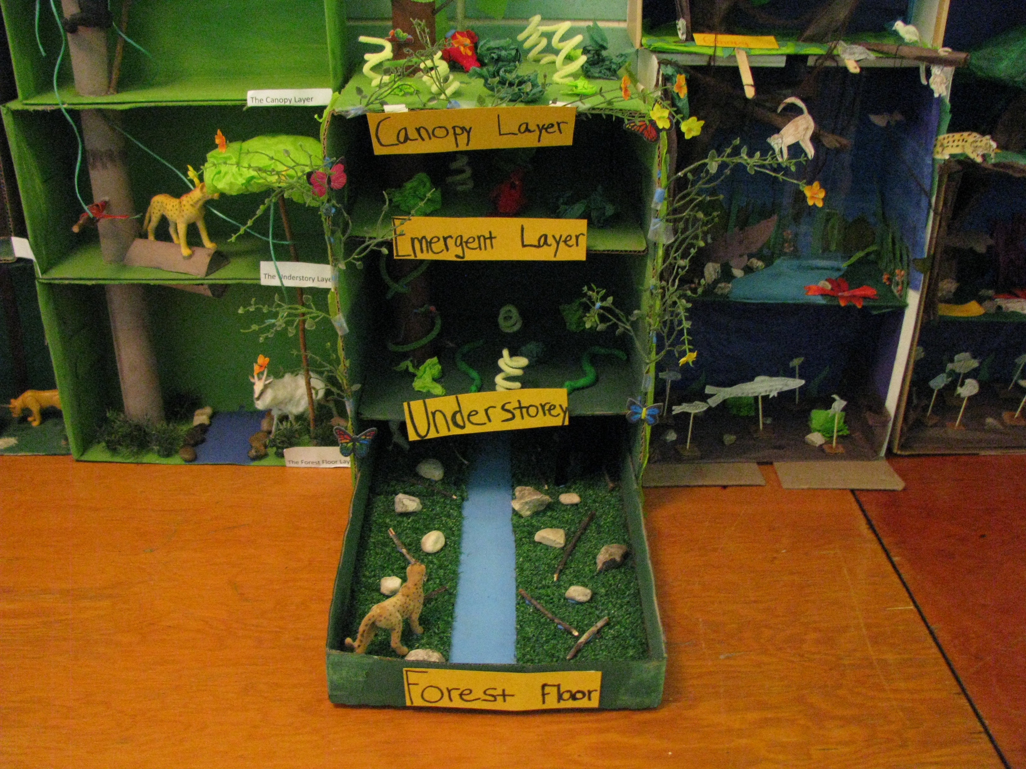Grade Seven Tropical Rain Forests