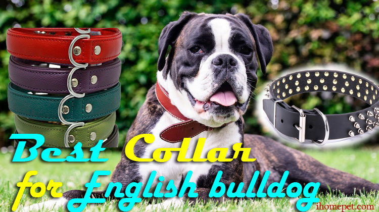 Choosing the Right English Bulldog Training Course For Your Bulldog