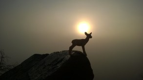 On the walls of the palace, Bambi gazes upon his future lands