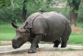 Delhi Zoo, Delhi India