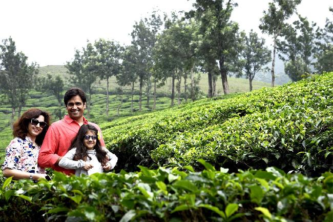 tea garden in munnar in june