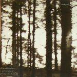 Cindytalk-The-Wind-Is-Strong-1990 Artist Profile - Cindytalk