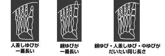 爪先の形状