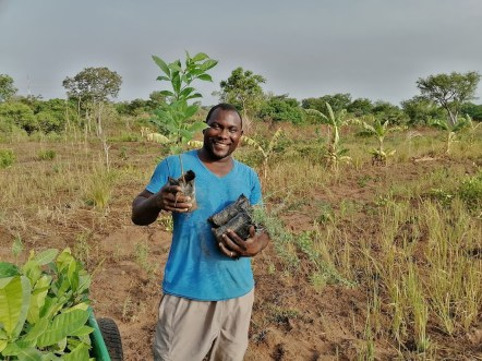 f Click A Tree Reforesting Ghana