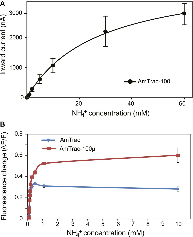 Fluorescent Sensors Reporting The Activity Of Ammonium Transceptors In Live Cells