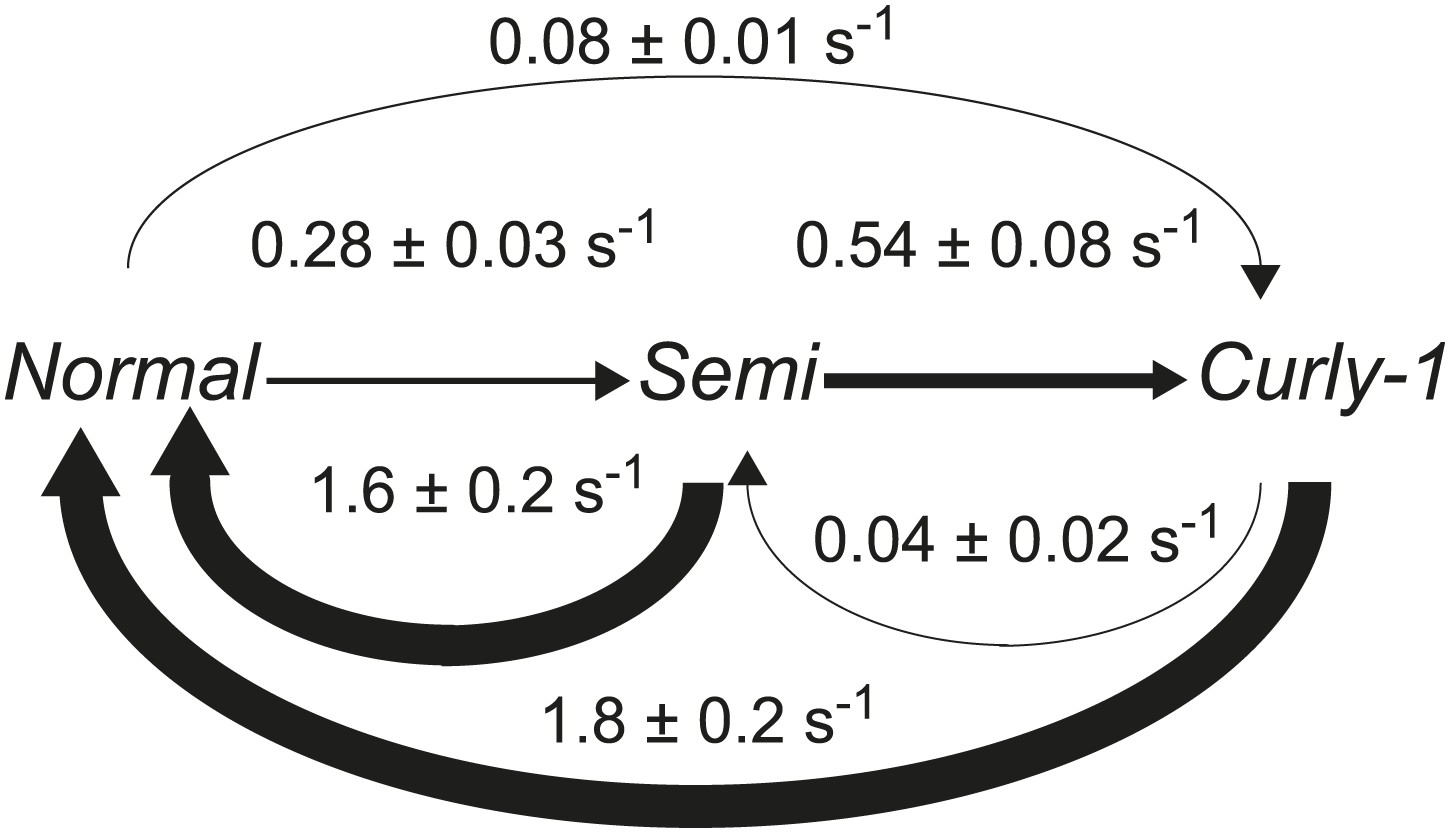 Figures And Data In Escherichia Coli Swimming Is Robust