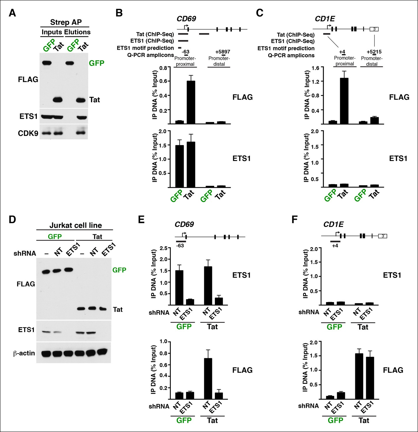 Hiv Tat Controls Rna Polymerase Ii And The Epigenetic