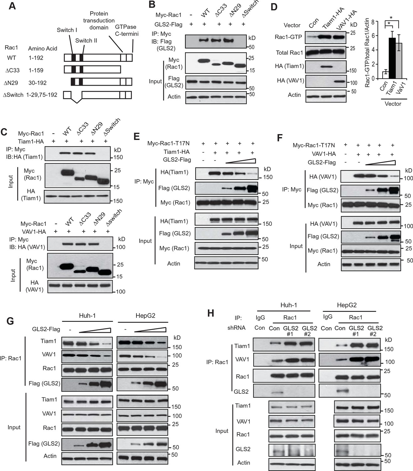 Glutaminase 2 Is A Novel Negative Regulator Of Small
