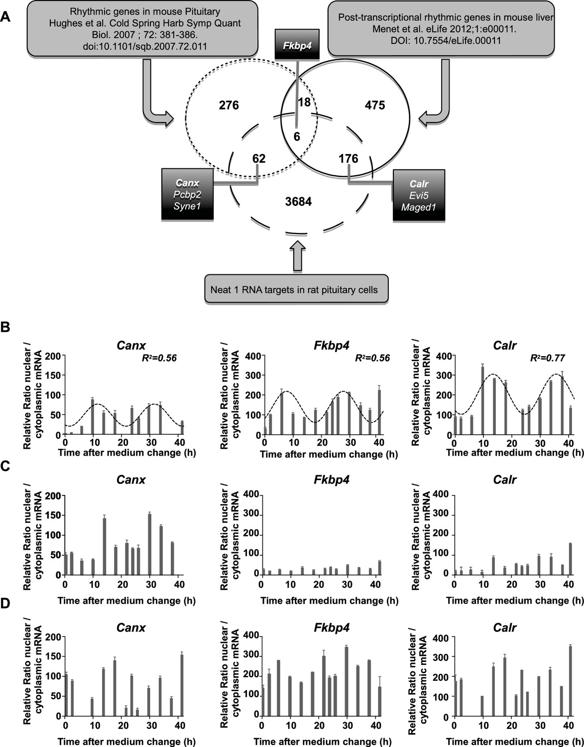 Circadian Rna Expression Elicited By 3 Utr Iralu