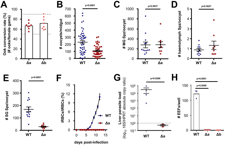 Malaria Parasite Limp Protein Regulates Sporozoite Gliding