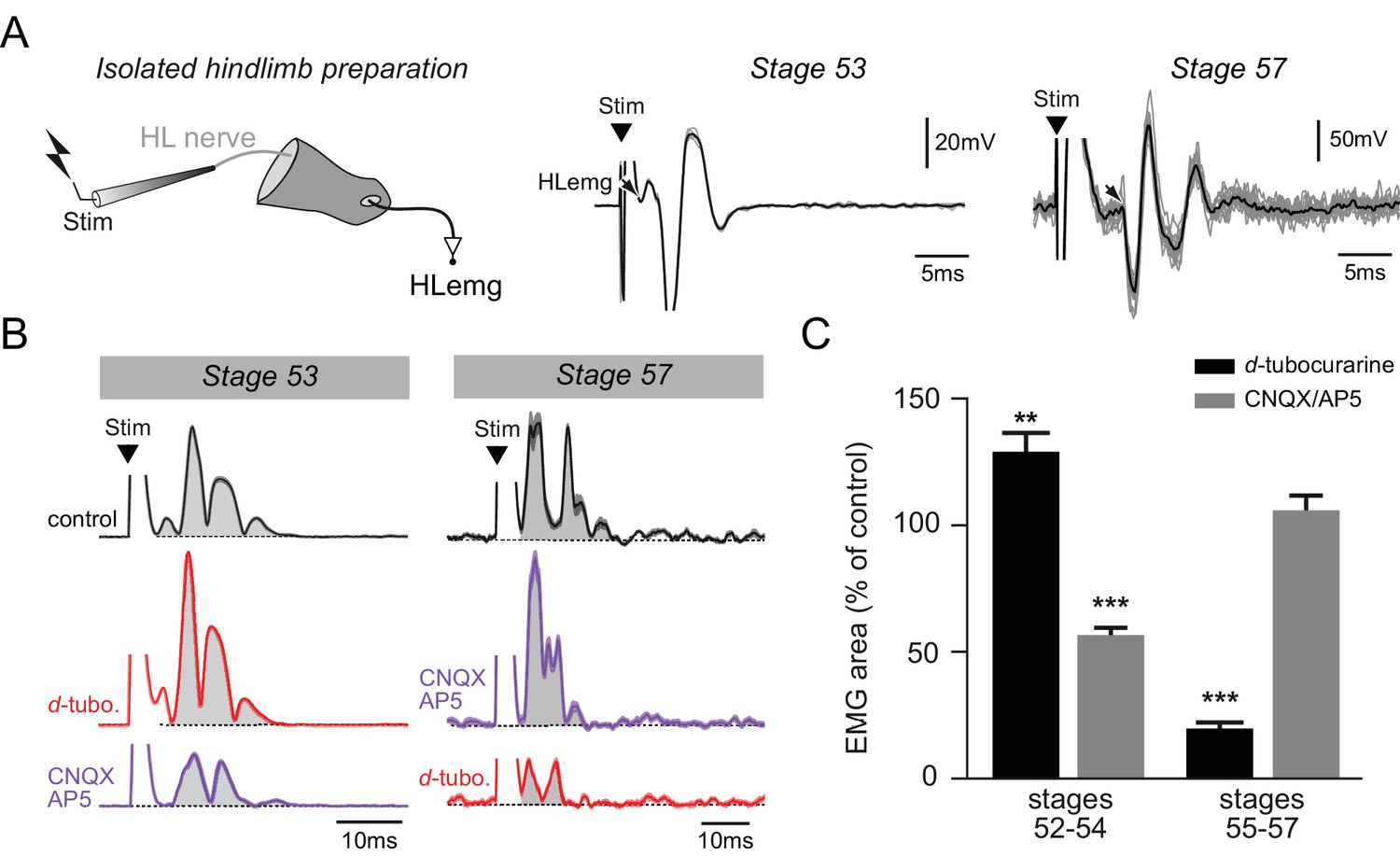 Figures And Data In Functional Limb Muscle Innervation