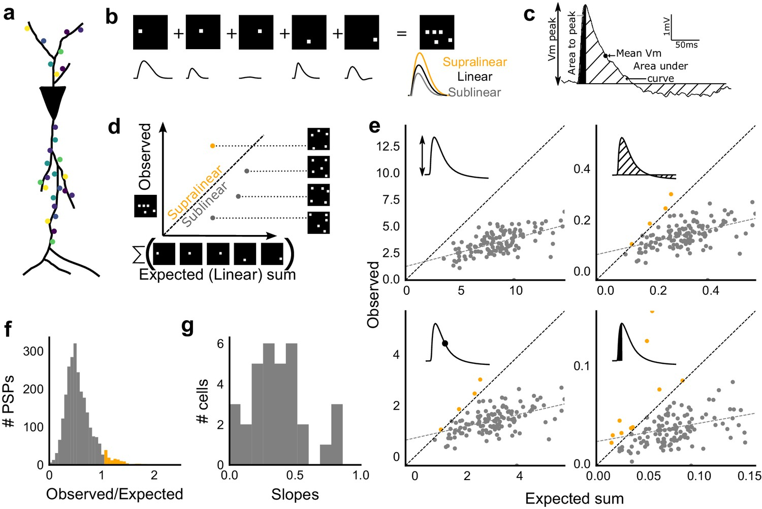 Precise Excitation Inhibition Balance Controls Gain And