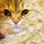 犬猫ペットの暑さ寒さ対策に!今日感テレビで紹介のドーム型ハウス