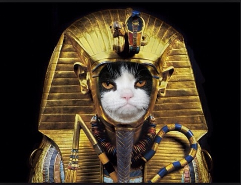 Image result for ancient egyptian cats