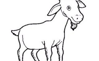 Mewarnai gambar kambing hitam putih. Gulai Ikan Tongkol Made In Juliha