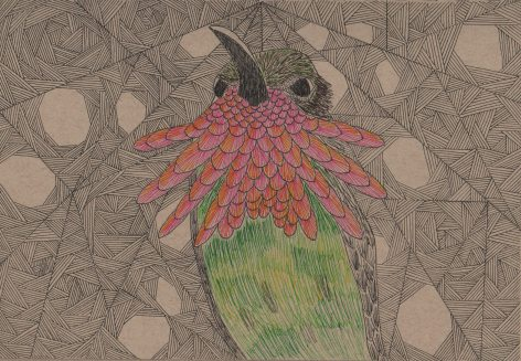 winethroatedhummingbird