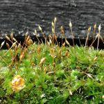 おはようございます。昨日の雨で苔も元気そうです今日の御岳も12℃位になりそうで、蔵の前の紅梅が咲くのが待ち遠しいです#蔵 #筏 #ikada #japan #Tokyo #mitake #御岳 #御岳山 #mitakesan #御岳山ロックガーデン #武蔵御嶽神社 #多摩川 #御岳渓谷 #奥多摩 #ブドウ山椒 #おにぎり#tasty #バイク #ロードバイク #デッドエンド #ジムニー #JA22 #ペット可 #苔