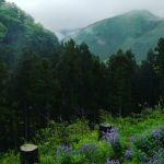 雨の日は、やっぱり深山にいるみたいです。でも花が咲いていると雰囲気も気分も違います#蔵 #筏 #ikada #japan #Tokyo #mitake #御岳 #御岳山#mitakesan #御岳山ロックガーデン #武蔵御嶽神社 #多摩川 #御岳渓谷 #奥多摩 #ブドウ山椒 #おにぎり #tasty #バイク #ロードバイク #カヌー #カヤック #リバーSUP #デッドエンド #ジムニー #ペット可 #ムラサキハナナ