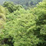 ♪御岳のみどり~爽やかに~♪ 若葉の緑もだいぶ濃くなってきましたhttp://ikadamitake.com営業時間11~17時木曜定休(祭日は営業)#炭鳥 #蔵 #筏 #ikada #Tokyo #mitake #御岳 #御岳山 #mitakesan #御岳山ロックガーデン #武蔵御嶽神社 #多摩川 #御岳渓谷 #奥多摩フィッシングセンター #奥多摩 #ブドウ山椒 #おにぎり #味玉 #tasty #バイク #ロードバイク #カヌー #カヤック #リバーSUP #アルパインクライミング #デッドエンド #ジムニー #ペット可 #青梅市民の歌
