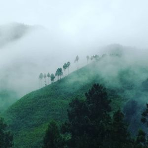 おはようございます。今回の大雨による被害に遭われた皆様、そして未だに心細い思いをなさっている方々に、心よりお見舞いを申し上げます。#炭鳥 #蔵 #筏 #ikada #mitake #tokyo #御岳 #御岳山 #大雨
