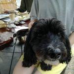 """ご予約を頂いたご夫婦は #ミックス犬 の""""ゆの くん""""と来て下さいましたゆのくんはミックス犬として、いいとこ取りのワンちゃんですね🤗家族みんなで #秋川渓谷 で川遊びを楽しんだそうです川の水は冷たくて気持ち良かったでしょうね️ ご来店ありがとうございました http://ikadamitake.com 営業時間11~17時(夏季)木曜定休(祭日は営業)※むかし鳥、ばくだんは数に限りがございます。1個からお取り置き致します♪Tel.0428-85-8726#炭鳥 #蔵 #筏 #ikada #むかし鳥 #mitake #tokyo #御岳 #御岳山 #御岳山ロックガーデン #武蔵御嶽神社 #多摩川 #御岳渓谷 #ランチ #奥多摩フィッシングセンター #奥多摩 #ブドウ山椒 #おにぎり #味玉 #バイク #ロードバイク #カヌー #カヤック #リバーSUP #ラフティング #デッドエンド #ジムニー #ペット可"""