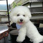 横浜市のご夫婦 @coronoroc さんと @coropontan さんが #ビションフリーゼ のCoronくんと一緒にお越し下さいました🤗Coronくんは2歳の男の子です🐕#日原鍾乳洞 へ行かれたそうですが、寒くなかったですかママに抱っこされてヌクヌクだったでしょうかご来店ありがとうございましたhttp://ikadamitake.com 営業時間11~17時(夏季)木曜定休(祭日は営業)※むかし鳥、ばくだんは数に限りがございます。1個からお取り置き致します♪Tel.0428-85-8726#炭鳥 #蔵 #筏 #ikada #むかし鳥 #mitake #tokyo #御岳 #御岳山 #御岳山ロックガーデン #武蔵御嶽神社 #多摩川 #御岳渓谷 #ランチ #奥多摩フィッシングセンター #奥多摩 #ブドウ山椒 #おにぎり #味玉 #バイク #ロードバイク #ペット可