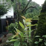 この季節に八重桜の古木に新芽が!http://ikadamitake.com 営業時間11~17時(夏季)木曜定休(祭日は営業)※むかし鳥、ばくだんは数に限りがございます。1個からお取り置き致します♪Tel.0428-85-8726#炭鳥 #蔵 #筏 #ikada #むかし鳥 #mitake #tokyo #御岳 #御岳山 #御岳山ロックガーデン #武蔵御嶽神社 #多摩川 #御岳渓谷 #御岳ランチ #奥多摩フィッシングセンター #奥多摩 #日原鍾乳洞 #味玉 #バイク #ロードバイク #カヌー #カヤック #リバーSUP #ラフティング #デッドエンド #ペット可 #八重桜