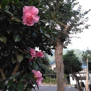 蔵の前の #山茶花 も、次々と咲く様になって来ました。これから冬の間、庭に彩りを添えてくれます♪http://ikadamitake.com営業時間11~17時(夏季)木曜定休(祭日は営業)※むかし鳥、ばくだんは数に限りがございます。1個からお取り置き致します♪Tel.0428-85-8726#炭鳥 #蔵 #筏 #ikada #むかし鳥 #炭鳥ikada #ばくだん #mitake #tokyo #御岳 #御岳山 #御岳山ロックガーデン #武蔵御嶽神社 #多摩川 #御岳渓谷 #御岳ランチ #奥多摩フィッシングセンター #奥多摩 #日原鍾乳洞 #味玉 #バイク #ロードバイク #カヌー #カヤック #リバーSUP #デッドエンド #ペット可