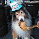 ワンちゃんは家族の一員お誕生日に、ワンちゃんも食べられる味なしむかし鳥はいかがでしょうか🤗http://ikadamitake.com営業時間4月から12月 11〜17時  1月から3月  11〜16時金曜定休(祭日は営業)※むかし鳥、ばくだんは数に限りがございます。1個からお取り置き致します♪Tel.0428-85-8726#むかし鳥 #炭鳥ikada #ばくだん #mitake #tokyo #御岳 #御嶽駅 #御岳山 #御岳山ロックガーデン #武蔵御嶽神社 #御岳神社 #多摩川 #御岳渓谷 #東京アドベンチャーライン #御岳ランチ #奥多摩フィッシングセンター #奥多摩 #日原鍾乳洞 #味玉 #串 #バイク #ロードバイク #カヌー #カヤック #riversup #デッドエンド #ペット可