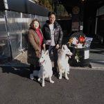 """埼玉県さいたま市にお住まいのご夫婦が二頭の #ホワイトシェパード と一緒にお越し下さいました1枚目、左がお母さんの""""パールちゃん""""♀3歳、右が息子の""""ダイヤくん""""♂1歳ですダイヤくんは1歳で既にお母さんより大きいですね2枚目のpicでは、左の奥にいるのがダイヤくんです♪武蔵御嶽神社に伝わる伝説・日本武尊(ヤマトタケルノミコト)が道に迷った時に現れて導いてくれた狼…本当はニホンオオカミですが、イメージ的にはパールちゃん&ダイヤくんがぴったりです🤗当店には御岳山にいらした帰りに お立ち寄り下さいました""""ワンちゃんも食べられる味なしむかし鳥""""を2本ご注文下さいましたが、二頭ともペロリと平らげてくれたそうですご来店ありがとうございましたhttp://ikadamitake.com営業時間・1月〜 3月 11〜16時4月〜12月 11〜17時金曜定休(祭日は営業)※むかし鳥、ばくだんは数に限りがございます。1個からお取り置き致します♪Tel.0428-85-8726#むかし鳥 #体験型 #炭鳥ikada #ばくだん #mitake #tokyo #御岳 #御嶽駅 #御岳山 #御岳山ロックガーデン #武蔵御嶽神社 #御岳神社 #多摩川 #御岳渓谷 #東京アドベンチャーライン #御岳ランチ #奥多摩フィッシングセンター #奥多摩 #日原鍾乳洞 #okutama #バイク #ロードバイク #カヌー #カヤック #riversup  #デッドエンド #ペット可"""