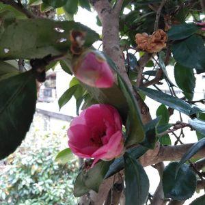 冬の彩りのひとつ #山茶花約3ヶ月前から次々と咲いて、ずっと目を楽しませてくれていますhttp://ikadamitake.com営業時間・1月〜 3月 11〜16時4月〜12月 11〜17時金曜定休(祭日は営業)※むかし鳥、ばくだんは数に限りがございます。1個からお取り置き致します♪Tel.0428-85-8726#むかし鳥 #体験型 #炭鳥ikada #ばくだん #mitake #tokyo #御岳 #御嶽駅 #御岳山 #御岳山ロックガーデン #武蔵御嶽神社 #御岳神社 #多摩川 #御岳渓谷 #東京アドベンチャーライン #御岳ランチ #奥多摩フィッシングセンター #奥多摩 #日原鍾乳洞 #okutama #バイク #ロードバイク #カヌー #カヤック #riversup #デッドエンド #ペット可 #サザンカ
