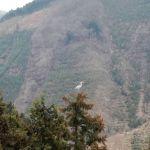 白鷺が留まる木の先端何ヵ所
