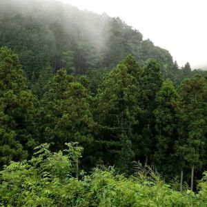 御岳でも雨が続きますが、九州の大雨は大丈夫でしょうか?心配ですね…。 #大雨災害警報 #九州大雨