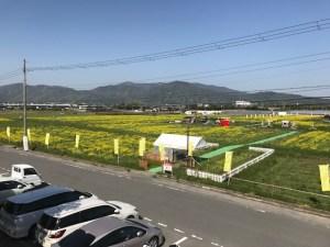 亀岡 菜の花畑