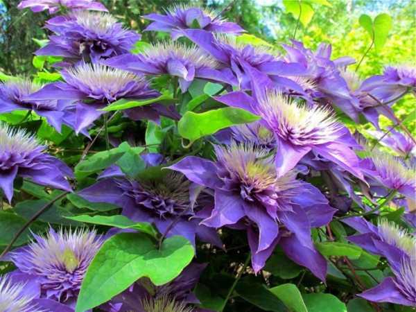 Многолетние цветы с названиями и фото – Многолетние цветы ...