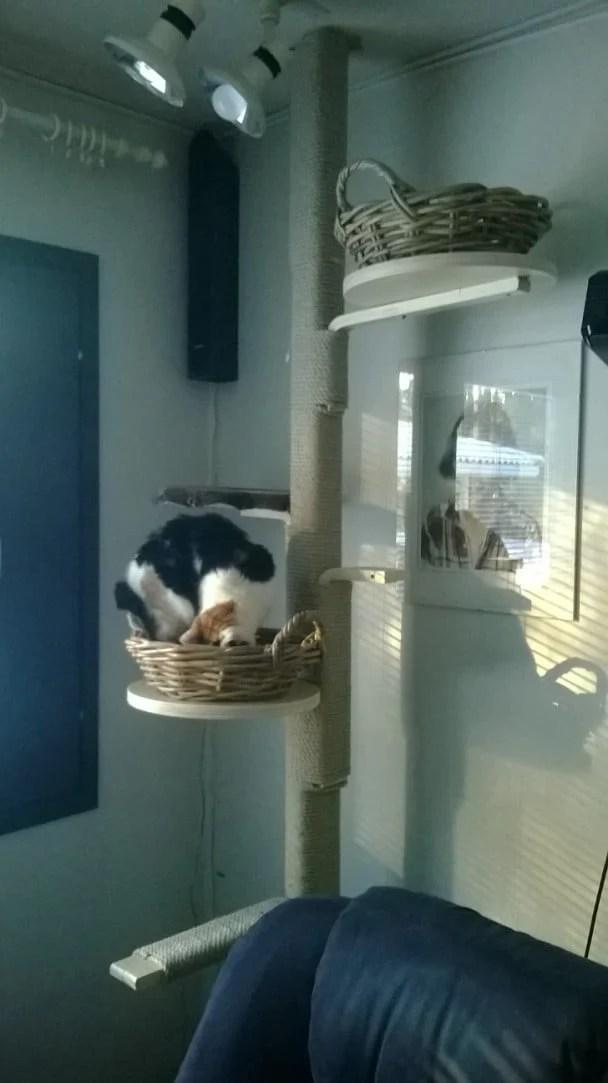Cats Climbing Tree Ikea Hackers