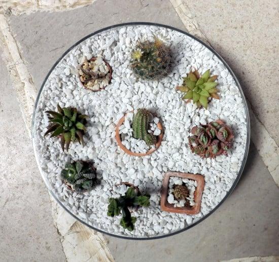 Mini cactus garden in an IKEA BLOMSTER bowl