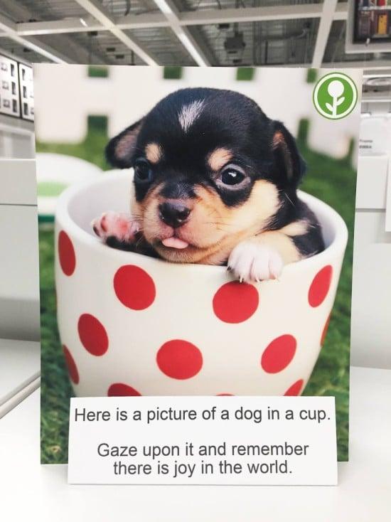 gaze-at-puppy