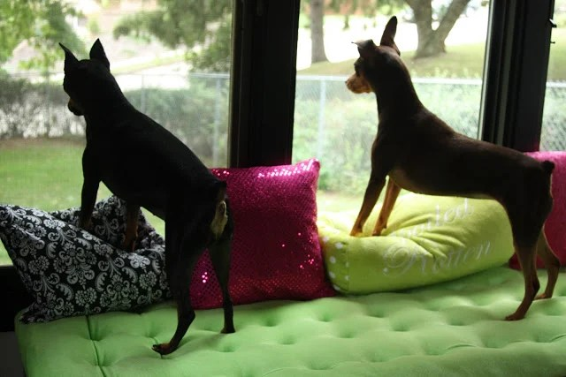 Hacks for dogs - window seat for dogs