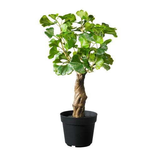 Bonsai From Fejka Plants Ikea Hackers