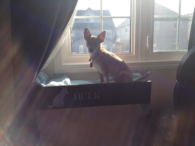 Diy Dog Window Perch With Steps Ikea Hackers
