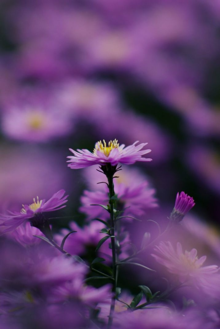 aster_20190929_165111_