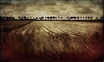 THE FIELD, NORMANDY