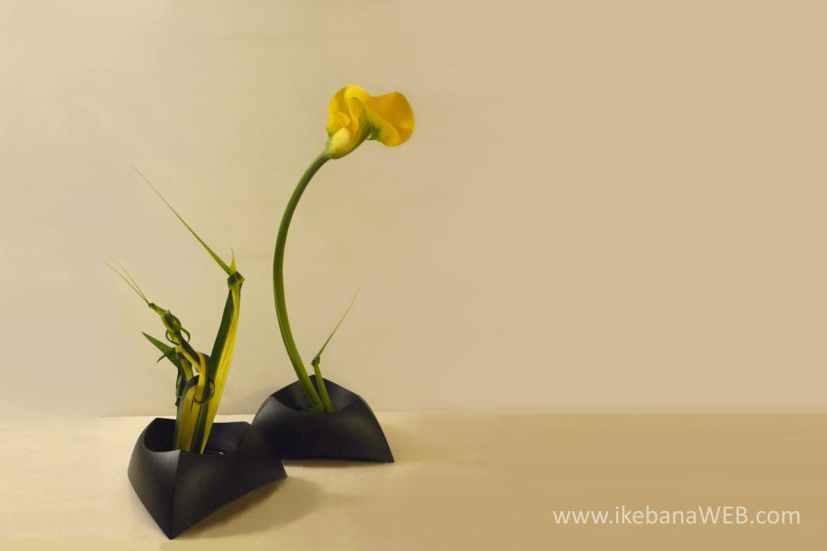 Ikebana as meditation