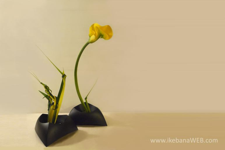 ikebana arrangement in two containers by Ekaterina Seehaus, Materials: calla, Australian flax икебана Согэтсу Sogetsu school ikebanaweb.com ikebana meditation article